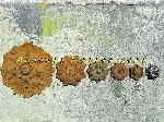 Rosaces de décoration pour grille de fenêtre portail ou clotures [Petites annonces Negoce-Land.com]
